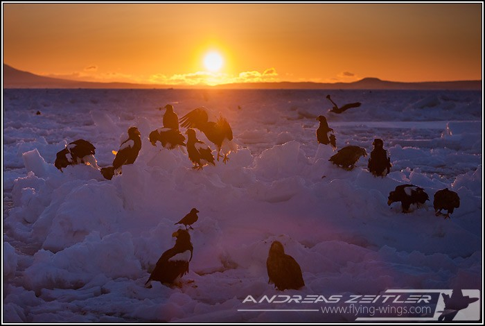 Sea Eagles At Rausu%2C Hokkaido%2C Japan Eagles 8368 Zeitler 700 470 90
